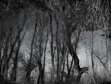 Fotografije iz šume