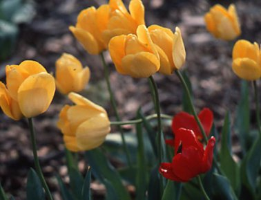 Cveće/Flowers