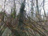 Digitalni pohod na šumu