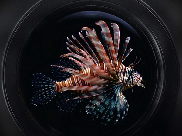 21. Festival podvodnog filma